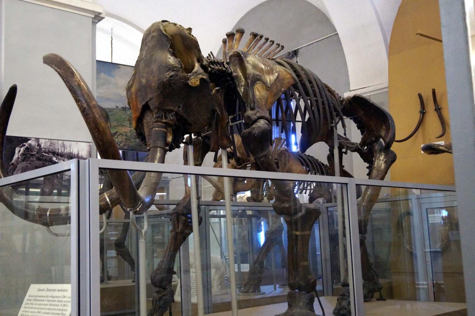 Мамаход в Зоологический музей